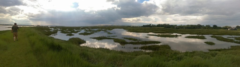 South Woodham Ferrers Boggy Marsh Photo by Adam Brennan